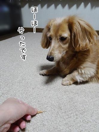 kinako8671.jpg