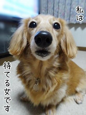 kinako8673.jpg