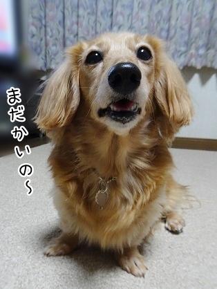 kinako8674.jpg