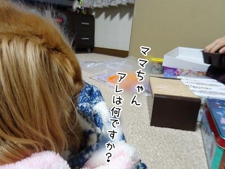 kinako8683.jpg