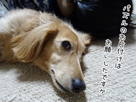 kinako8690.jpg