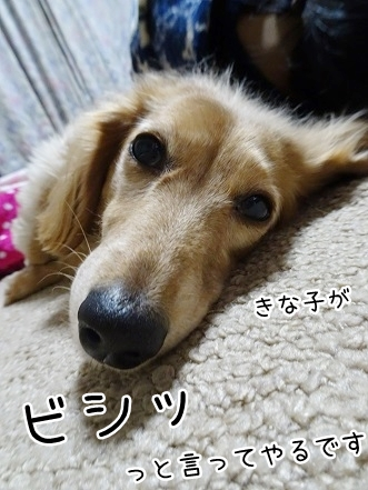 kinako8691.jpg