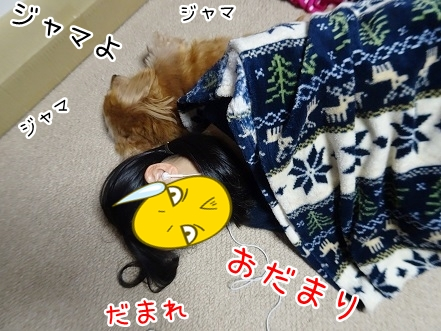 kinako8692.jpg