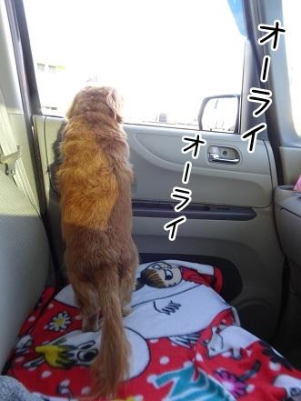 kinako8695.jpg