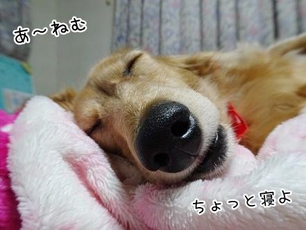 kinako8703.jpg