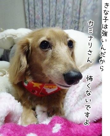 kinako8705.jpg