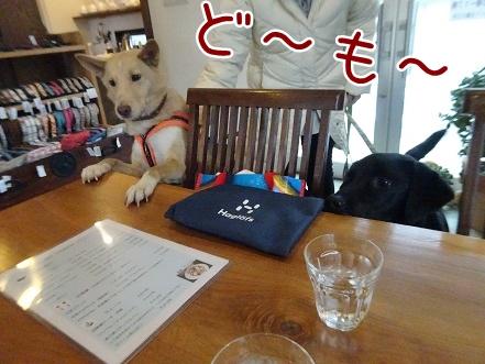 kinako8710.jpg