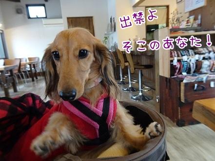 kinako8712.jpg