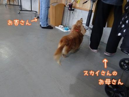 kinako8721.jpg