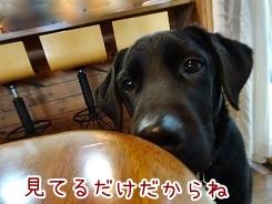 kinako8724.jpg