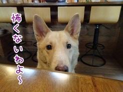 kinako8725.jpg