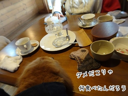 kinako8736.jpg
