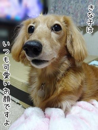 kinako8738.jpg