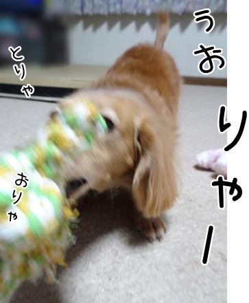 kinako8747.jpg