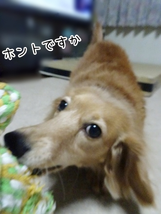 kinako8748.jpg