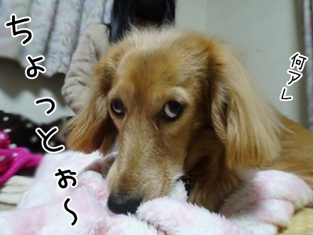 kinako8752.jpg