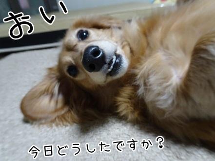 kinako8755.jpg