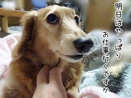 kinako8758.jpg