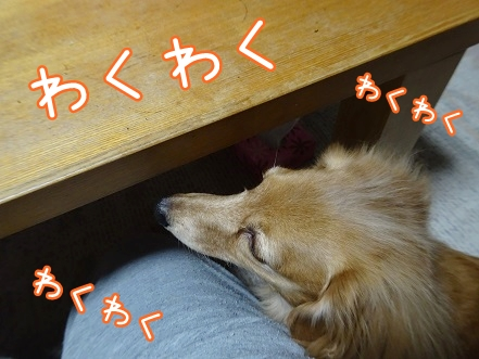 kinako8763.jpg