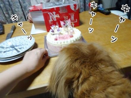 kinako8764.jpg