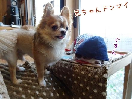 kinako8771.jpg