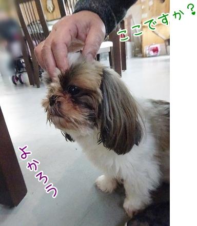 kinako8778.jpg