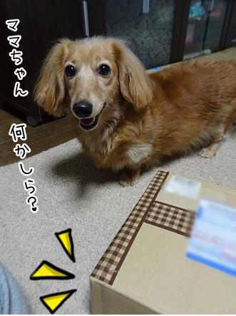 kinako8783.jpg
