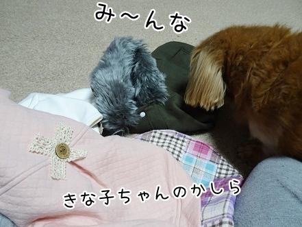 kinako8784.jpg