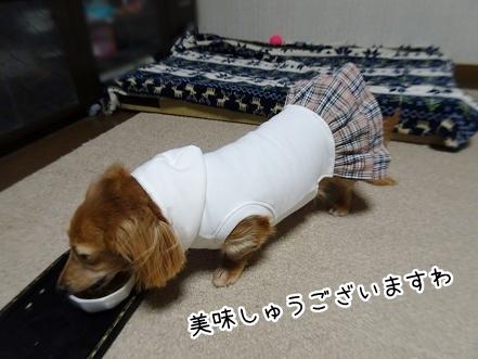 kinako8787.jpg