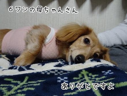 kinako8789.jpg