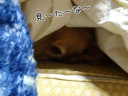 kinako8792.jpg