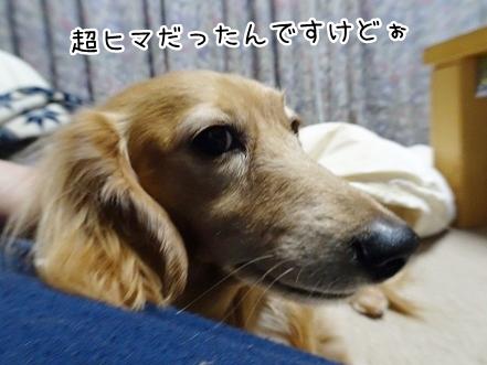 kinako8793.jpg