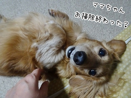 kinako8801.jpg
