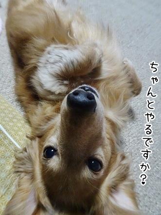 kinako8802.jpg