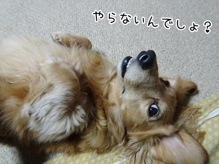 kinako8803.jpg