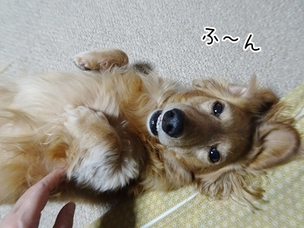 kinako8804.jpg