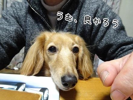 kinako8812.jpg