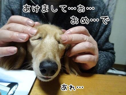 kinako8814.jpg