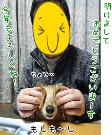 kinako8815.jpg