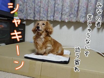 kinako8818.jpg
