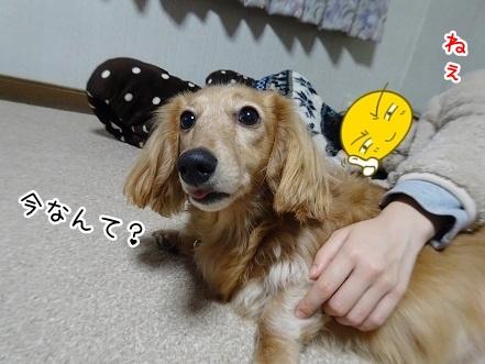 kinako8824.jpg