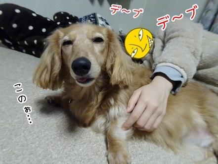 kinako8825.jpg