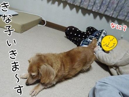kinako8826.jpg