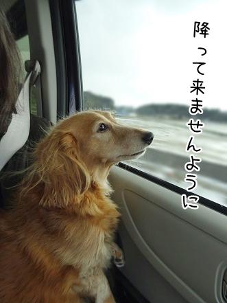 kinako8830.jpg