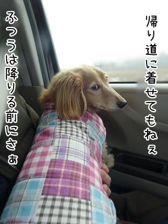 kinako8834.jpg