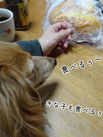 kinako8836.jpg
