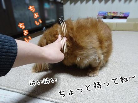kinako8837.jpg