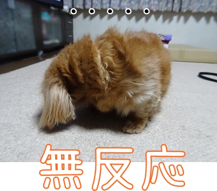 kinako8838.jpg