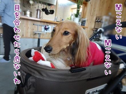 kinako8846.jpg
