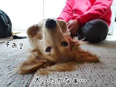 kinako8850.jpg